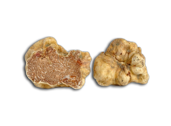 White Truffles of Alba or Acqualagna - Tartufo Bianco Tuber Magnatum Pico